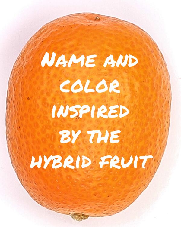 02Koumkwat_Fruit02